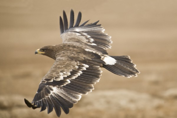 Bird Watching In Oregon: The Malheur National Wildlife Refuge