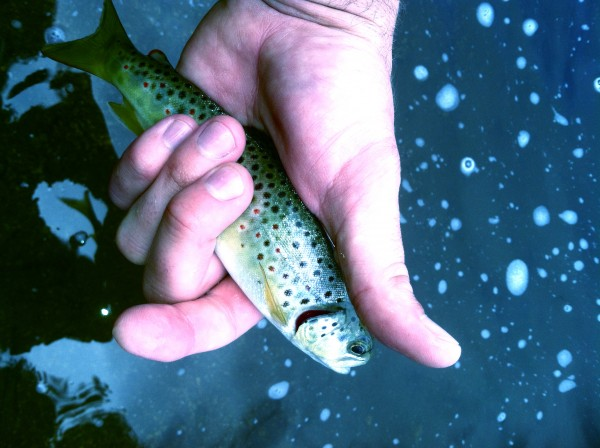 Winter Fly Fishing In Oregon: How Not To Strike Out